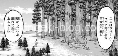 ここは巨大樹の森