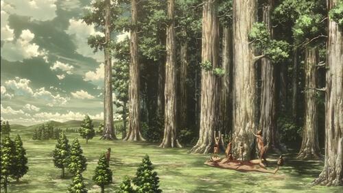 巨大樹の森だよ